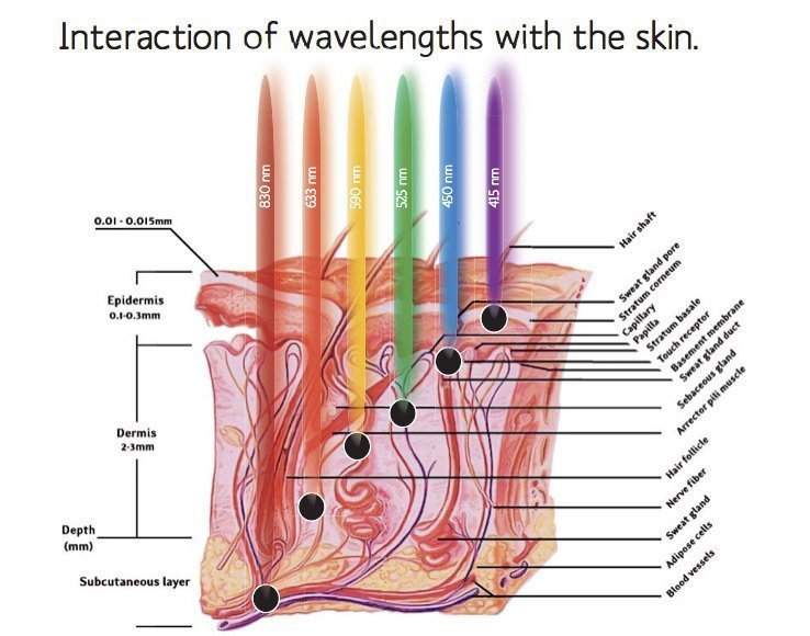 What are LED Light Therapy and how do they work? 3
